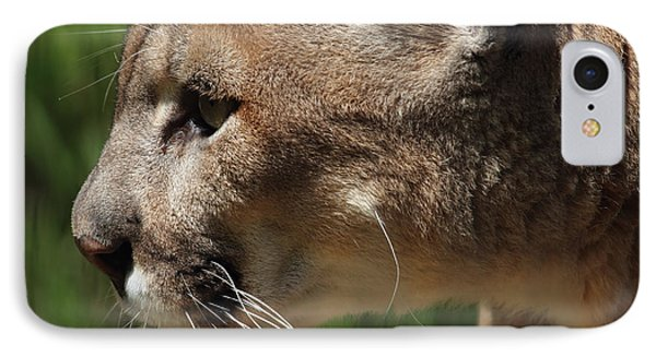 IPhone Case featuring the photograph Florida Panther Profile by Meg Rousher