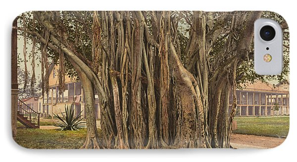 Florida Rubber Tree, C1900 Phone Case by Granger