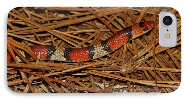 IPhone Case featuring the photograph Florida Scarlet Snake by Lynda Dawson-Youngclaus