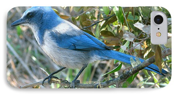 Florida Scrub Jay IPhone Case by Peg Urban