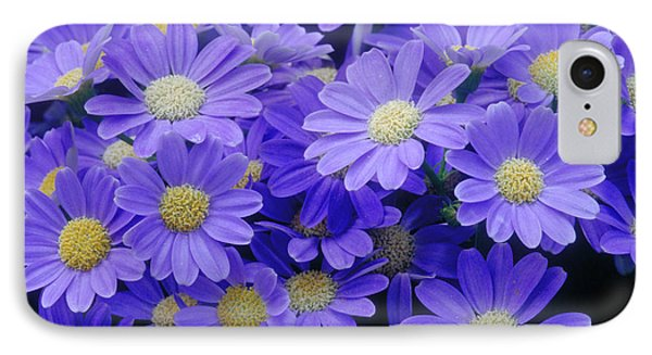 Florists Cineraria Hybrid IPhone Case by Geoff Bryant