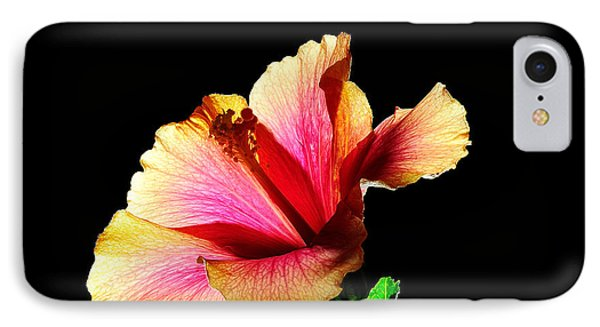 Flower At Night IPhone Case by Marwan Khoury
