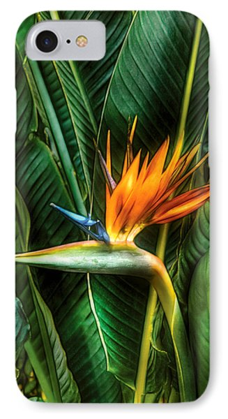 Flower - Bird Of Paradise IPhone Case by Mike Savad