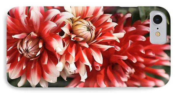 Flower-dahlia-red-white-trio Phone Case by Joy Watson