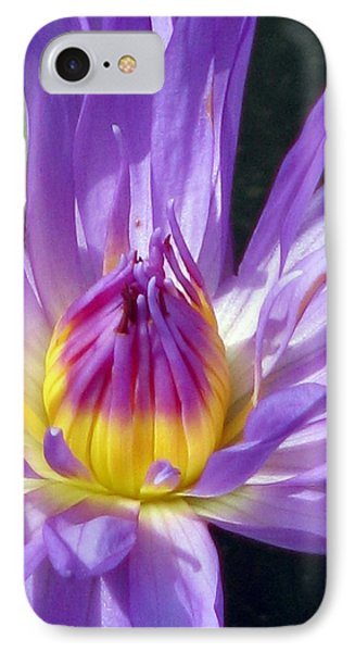 Flower Garden 70 IPhone Case by Pamela Critchlow
