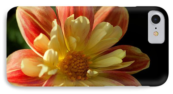 Flower In The Sun IPhone Case by Cherie Duran
