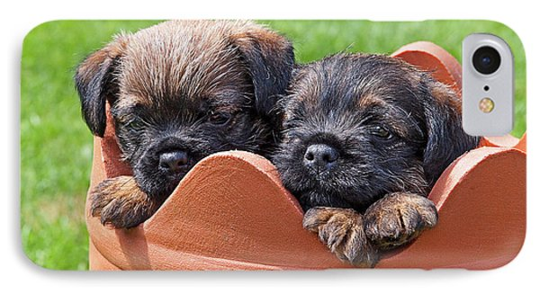 Flower Pot Puppies-border Terriers IPhone Case by Gill Billington
