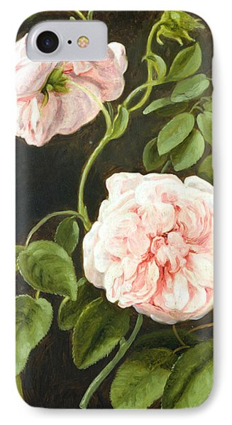 Flower Study IPhone Case by Johann Friedrich August Tischbein