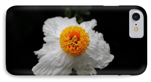 Flower Sunny Side Up IPhone Case