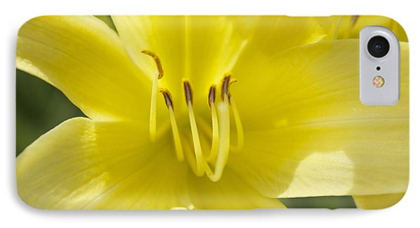 IPhone Case featuring the photograph Flower  by Trace Kittrell