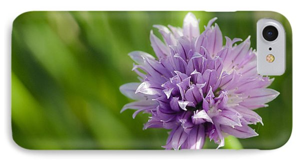 Flowering Chive IPhone Case by Dee Cresswell
