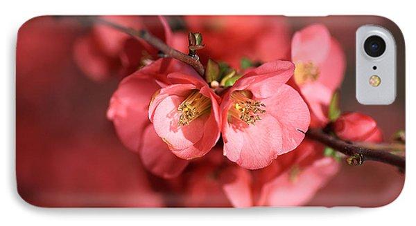 Flowering Quince IPhone Case