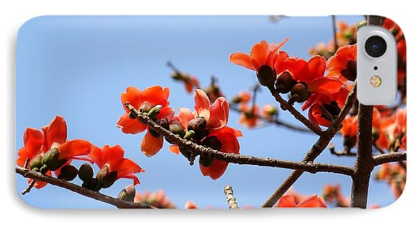 Flowers Of The Red Silk Cotton Tree IPhone Case