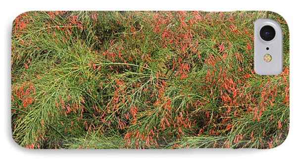 Flowers On Coral Plants Russelia IPhone Case by Panoramic Images