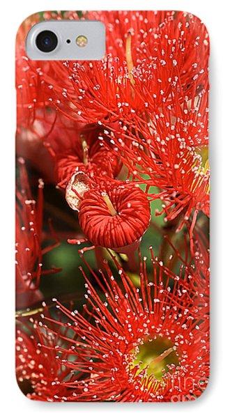 Flowers-red Eucalyptus-australian Native Flora Phone Case by Joy Watson