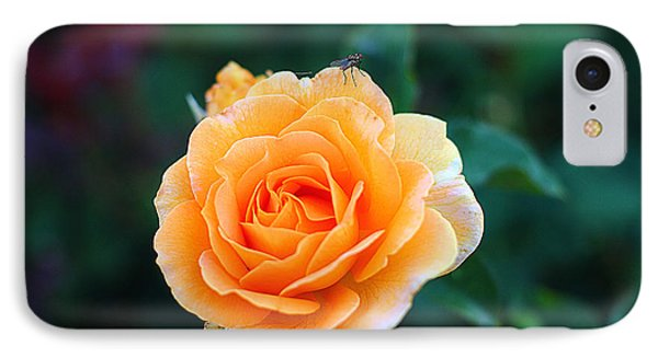 Fly On A Rose IPhone Case by Kevin Ashley