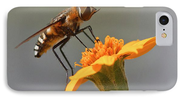 Fly Resting On Wildflower, Edinburg IPhone Case by Larry Ditto