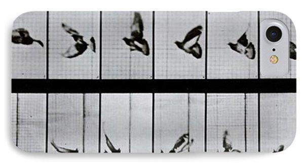 Flying Bird IPhone Case by Eadweard Muybridge