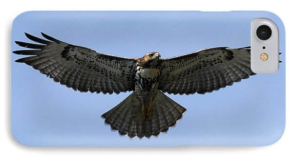 Flying Free - Red-tailed Hawk IPhone Case by Meg Rousher