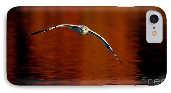 Flying Gull On Fall Color IPhone Case by Robert Frederick