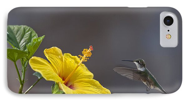 Flying In For A Quick Meal IPhone Case by Robert Camp