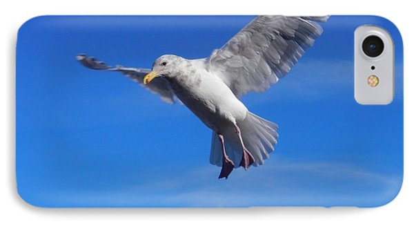 IPhone Case featuring the photograph Flying Seagull by Karen Molenaar Terrell