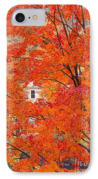 Foliage Window IPhone Case by Alan L Graham