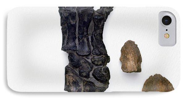 Foot Bones Of Hadrosaur And Triceratops IPhone Case