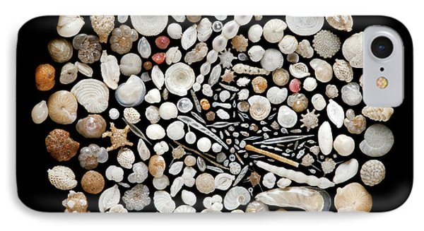 Foraminifera From Lagoon Of Venice IPhone Case