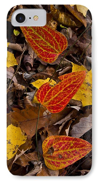 Forest Floor Beauty.... IPhone Case