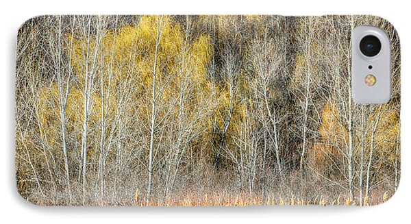 Forest In Late Fall At Scarborough Bluffs Phone Case by Elena Elisseeva