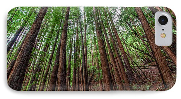 Forest Scene In Muir Woods State Park IPhone Case