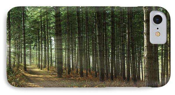 Forest Sun Rays Phone Case by Svetlana Sewell