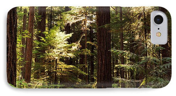 Forest Sunlight IPhone Case by Leland D Howard