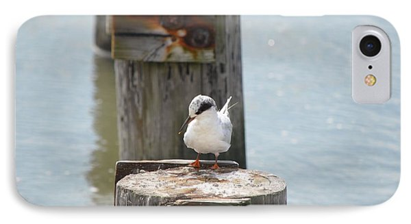 Forster's Tern IPhone Case