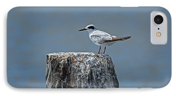 Forster's Tern Phone Case by Louise Heusinkveld