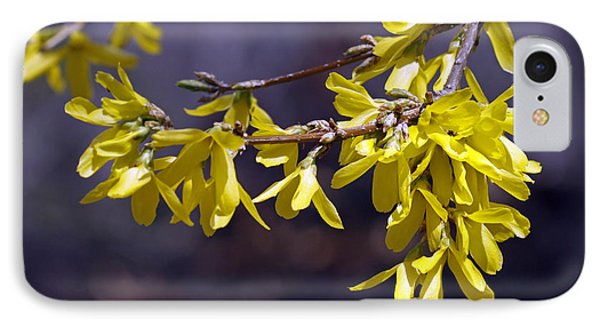 Forsythia IPhone Case by Denise Pohl