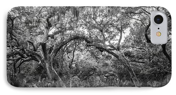 Fort Clinch Live Oaks Phone Case by Dawna  Moore Photography