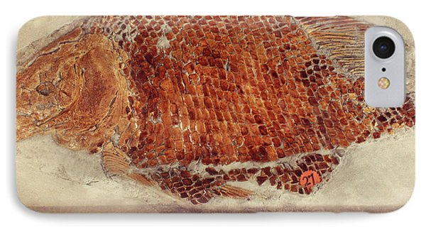 Fossil Fish Cast IPhone Case