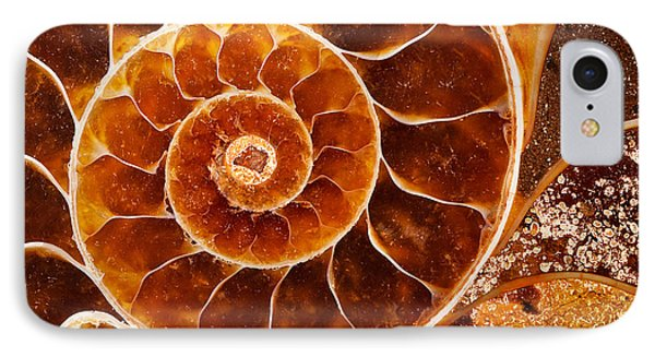 Fossil Nautilus IPhone Case by Alice Cahill