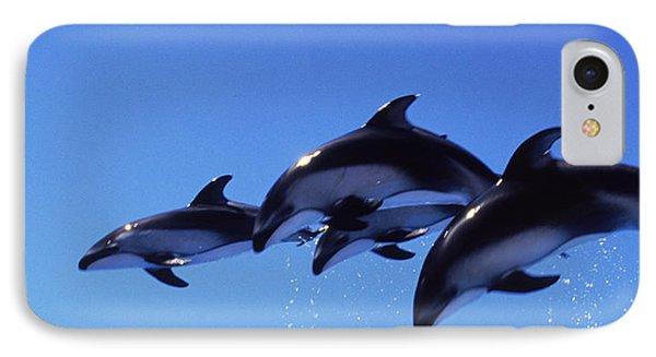 Four Bottle-nosed Dolphins Tursiops IPhone Case by Panoramic Images