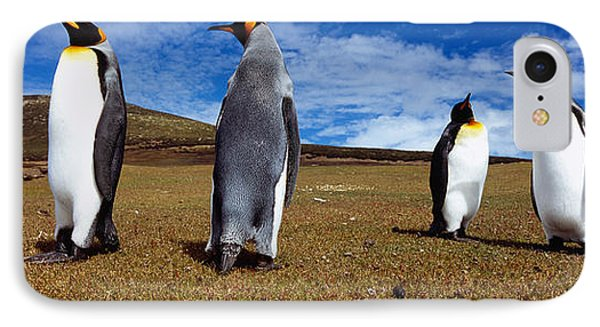 Four King Penguins Standing IPhone Case