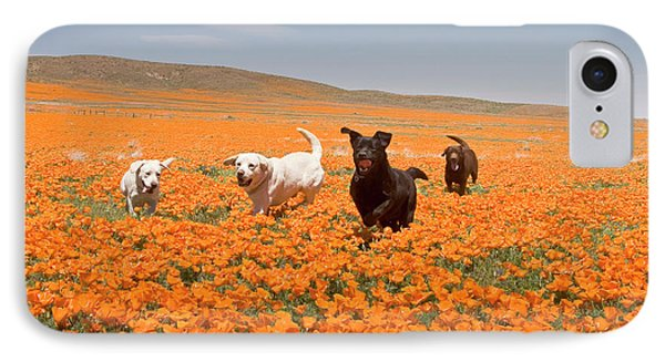 Four Labrador Retrievers Running IPhone Case