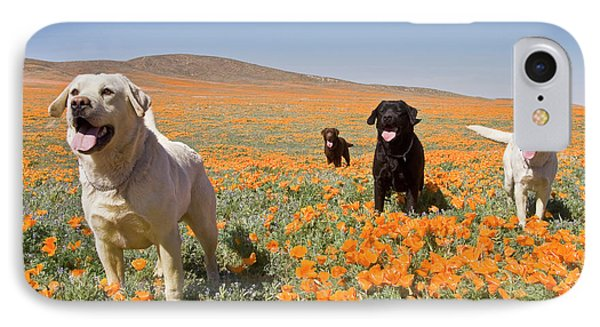 Four Labrador Retrievers Standing IPhone Case