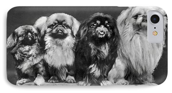 Four Pekingese On A Box IPhone Case by Underwood Archives