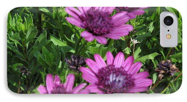 Four Purple Flowers IPhone Case by Tina M Wenger