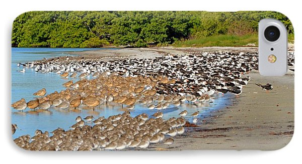 IPhone Case featuring the photograph Four Species Of Birds At Roost On Tampa Bay Beach by Jeff at JSJ Photography