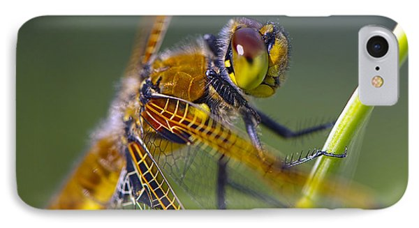 Four Spotted Chaser IPhone Case by Sharon Talson