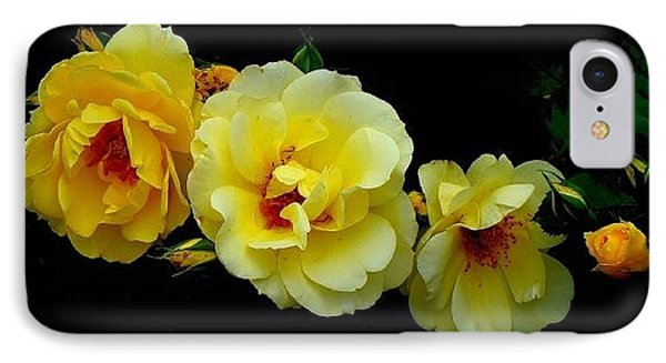 Four Stages Of Bloom Of A Yellow Rose IPhone Case by Janette Boyd