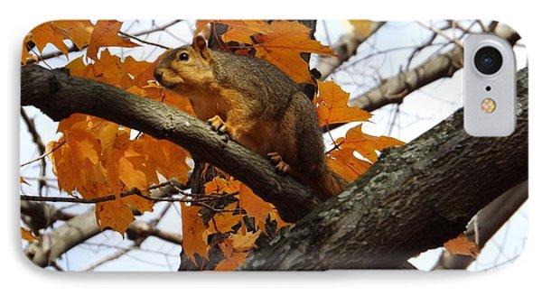 Fox Squirrel In Autumn Phone Case by Sara  Raber